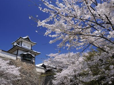 Cherry Blossoms at Kanazawa Castle and Kenroku Garden
